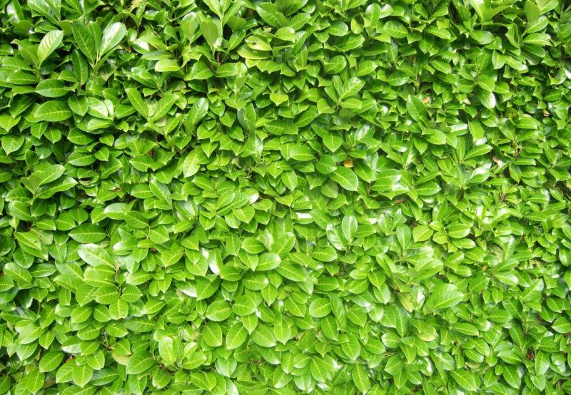 Taille des végétaux