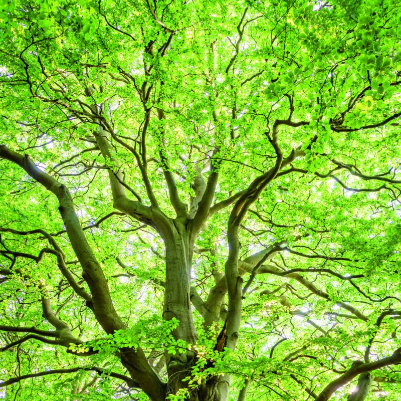 expo arbre