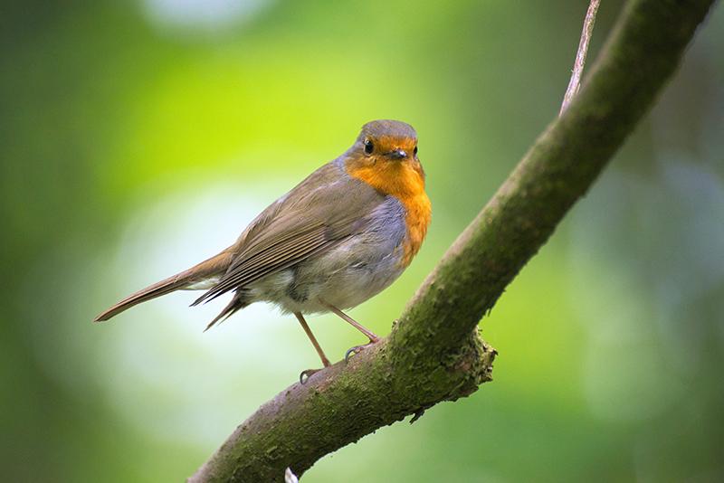 Conférence «Les oiseaux»