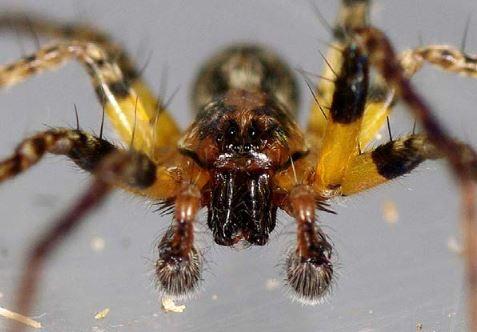 Sortons les araignées de l'Ombre !