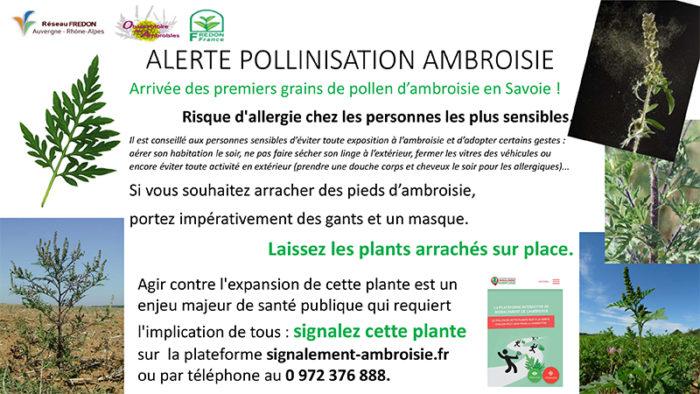 Alerte pollinisation ambroisie